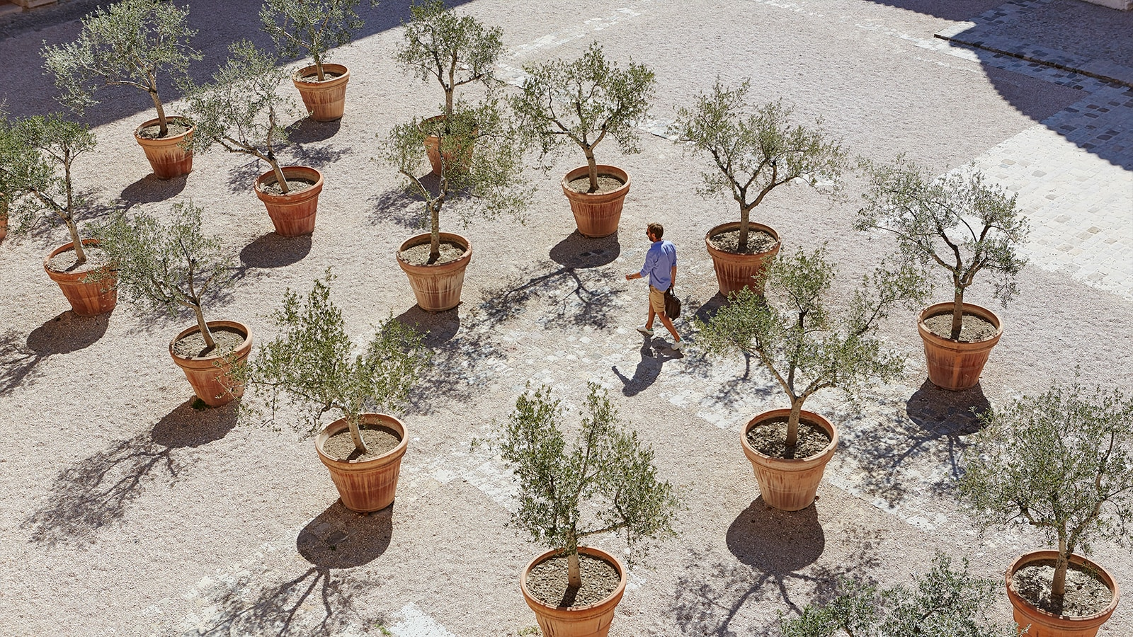 Organised rows of pots with trees in
